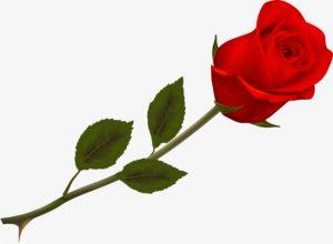 rosa psiqueasy