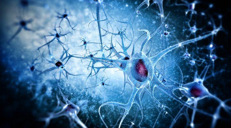 Brain Neurons Alzheimers Reading Room
