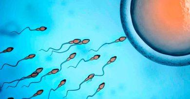 fecundação vida intrauterina